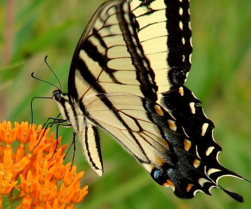 butterfly change
